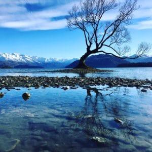 That Wanaka Tree - foto cliente NZViajes