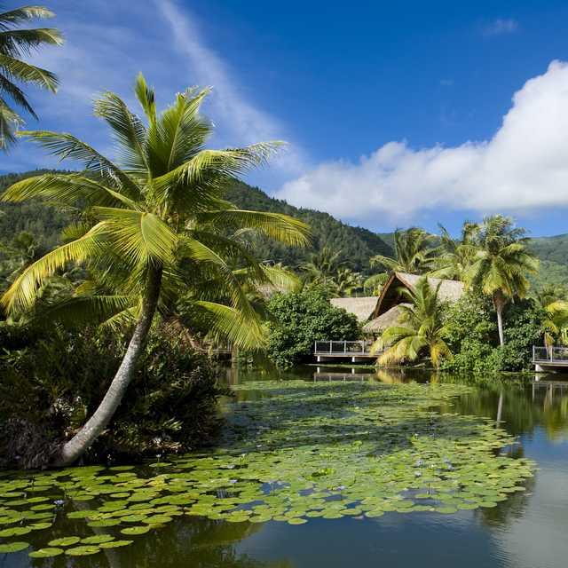 Huain - Paquete Dulce Polinesia
